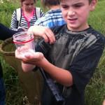 Observation des insectes capturés