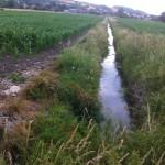 Un peu ruisseau au milieu de la prairie
