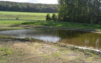 Suite chantier du jardin d'eau