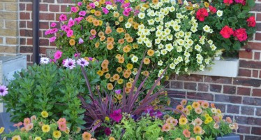 Fleurissement des espaces communaux