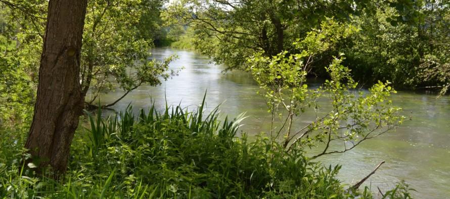 Au jardin d'eau, la nature reprend ses droits