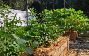 Parcelles à louer aux jardins communaux
