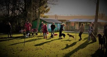 Concours de l'association Education et Sport Canin Dieppois